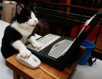 animals_working